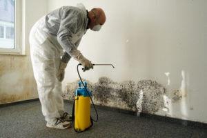 reinigung haus sanitaersarbeiten schimmel
