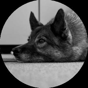 immoeinfach kaja hund