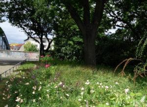 park pflanzen berlin