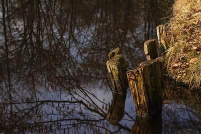 Foto Grafik Waldsee Spandauer Forst