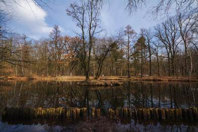 Foto Grafik Spandauer Forst Wald