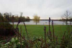 havel kladow unscharf pflanzen