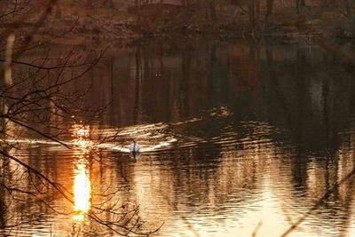 Sonnenuntergang Schwan Wasser Spiegelung