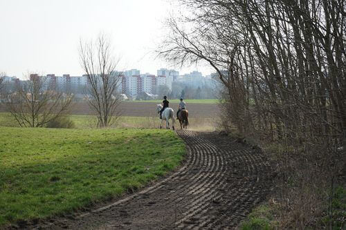 reiter pferde pflerdeweg luebars park