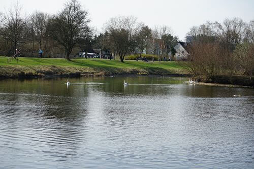 maerkisches viertel Seggeluchbecken wasser natur
