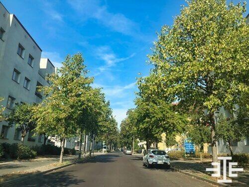 berlin adlershof strasse baum immobilie wohnung