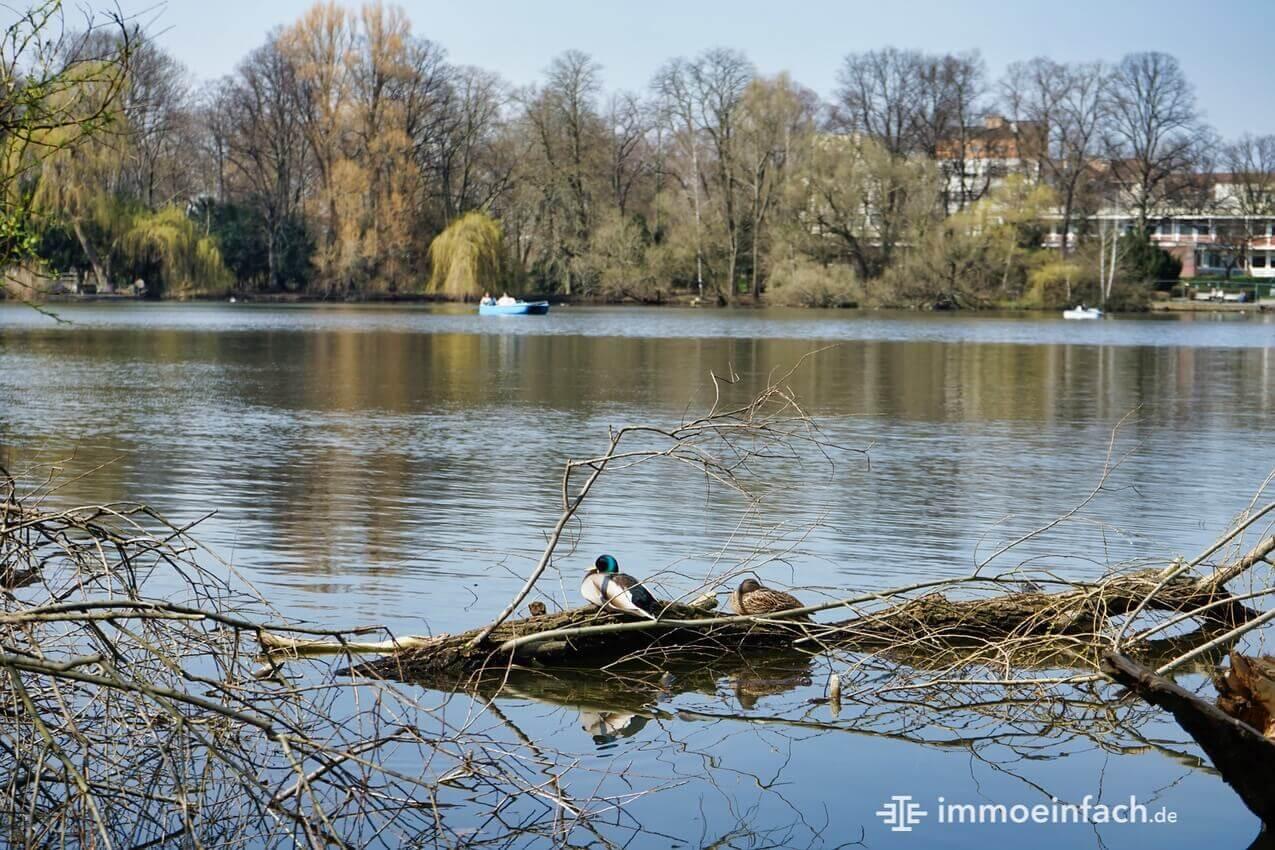 Reinickendorf Schaefersee Enten Boot