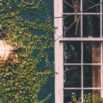 Mit Efeu bewachsene Hausfassade bei Abend